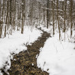 Creek in winter forest — Stock Photo