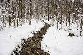 Kış orman dereye — Stok fotoğraf
