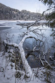 Lake in winter — Stock Photo