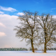Royalty-Free Stock Photo: Two trees in winter landscape