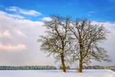 Two trees in winter landscape — Stock Photo