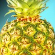 Closeup pineapple on blue — Stock Photo #23054162