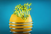eggshell with cress — Stock Photo