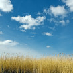 Golden dune grass — Stock Photo #24126963
