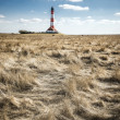 Stock Photo: Gras with lighthouse