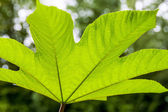 Alt parlayan yaprak — Stok fotoğraf