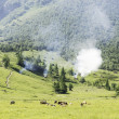 Stock Photo: Landscape with cows and wild fire