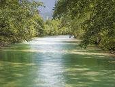 Rio verde, com árvores no verão — Fotografia Stock