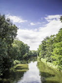 River with trees in summer — Foto Stock
