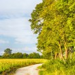 Path with trees and fields — Stock Photo