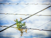 Plant on solar panel — Stock Photo