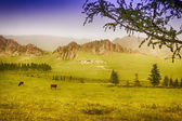 Yourt Camp in Terelj National Park — Stock Photo