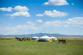 Yurts and horses in Mongolia — Stock Photo