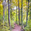 Stock Photo: Trail with foliage in forest in autumn