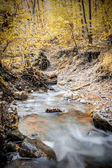 Creek in forest in autumn — Stockfoto