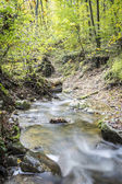Stream in bos — Stockfoto