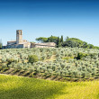Olive trees with old building — Stock Photo