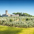 Olive trees with old building — Stock Photo #38165485