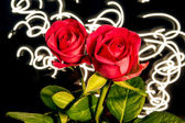 Roses with lights — Stock Photo