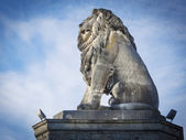 Lion of constance — Stock Photo