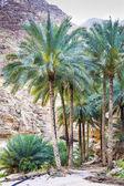 Wadi Shab Oman — Stock Photo