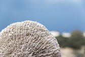 Oman beach sponge — Stock Photo