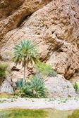 Wadi Shab Oman — Zdjęcie stockowe