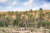 Oasis Al Haway Oman — Stock Photo