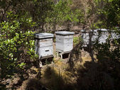 Beehives in the forest at The Etang de Cousseau Nature Reserve — Stock Photo