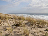 Dunes on Atlantic coast of France — Stock Photo