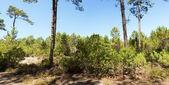Forest at The Etang de Cousseau Nature Reserve — Stock Photo