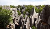 Kamienny las — Zdjęcie stockowe