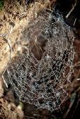 Spiders work — Stock Photo