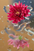 The autumn flowers — Stock Photo