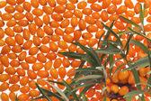 Medicinal orange fruit — Stock Photo