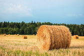 Straw Bales — Photo