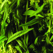 Stock Photo: Green plant