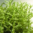 Green plant - Stock Photo