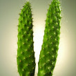 Cactus close-up - Stock Photo