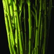Green plant stems — Stock Photo