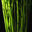 Stock Photo: Green plant stems