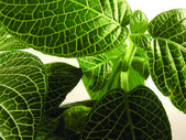 Green leafs close up — Stock Photo