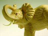 白象図 — ストック写真