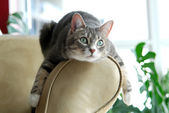 Cat on Couch — Stock Photo