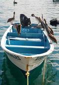 Pelikan na łodzi — Zdjęcie stockowe