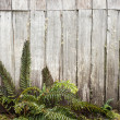 Ferns and old wooden cabin — Stock Photo #41646581