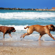 Stock Photo: Dog chase