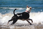 Dog in the water — Stock Photo