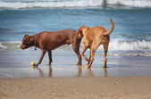 Dog sniff — Stock Photo