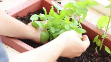 Planting a plant — Stock Video